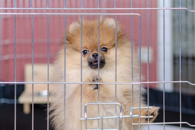 ケージの扉に両手をおいている子犬
