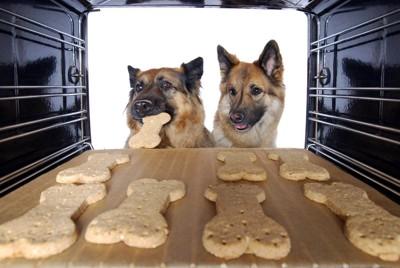 オーブンの中のクッキーを見る犬