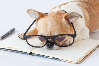 ネガネをかけた犬