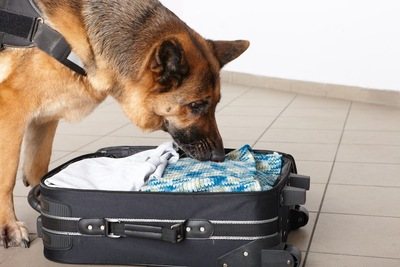 荷物のにおいをかぐ警察犬