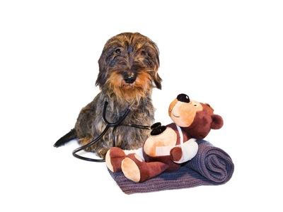 聴診器とくまのぬいぐるみと犬