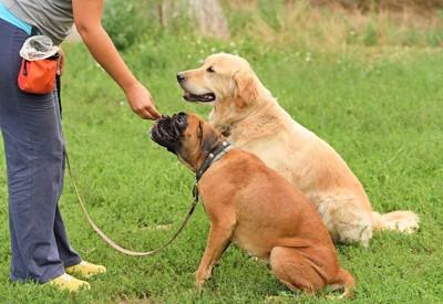 トレーニング中の2匹の犬