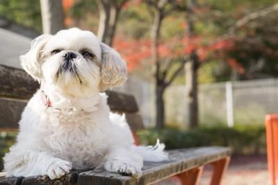 休憩する犬