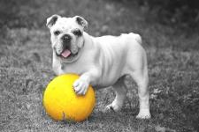 悲しそうにボールを持つ犬