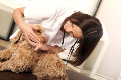 フィラリアの検査をする犬