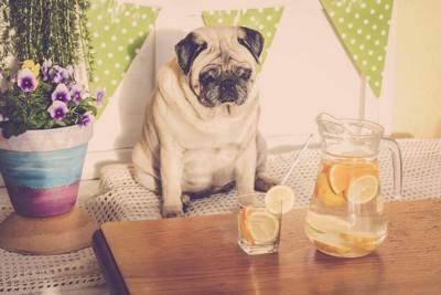 レモン水と犬