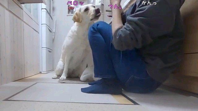 ペロッ~字幕