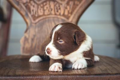 椅子の上に座る犬