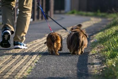お散歩する飼い主とダックスの後ろ姿