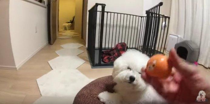 おもちゃを持つ手