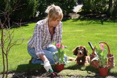 犬と一緒にガーデニングを楽しむ女性