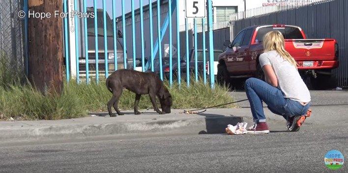 ワイヤリードに近づく犬