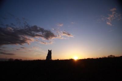 夕日に向かって座る犬のシルエット