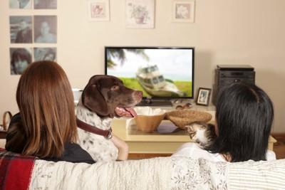 犬と一緒にテレビを見る女性2人