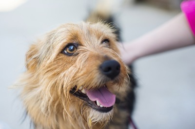 撫でられて喜んでいる犬の顔
