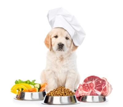 食材の後ろに座る犬