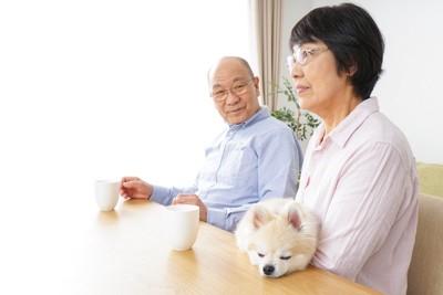 椅子に座る老夫婦と犬