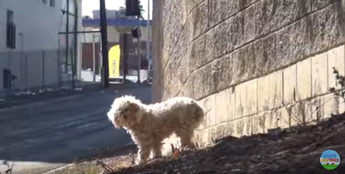 遠まきに人を見る犬
