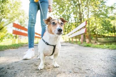 散歩中の女性と犬