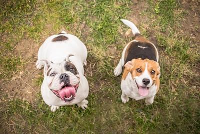 スマイル犬2頭