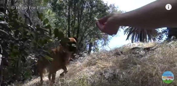 茂みから出て来る犬