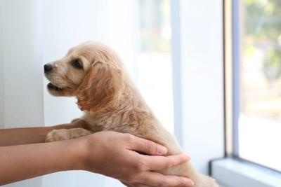 抱き上げられる子犬