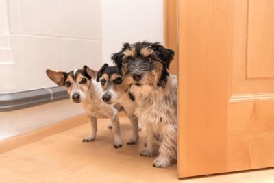 ドアを開けてこちらに来る3匹の犬