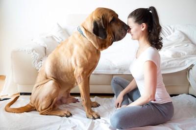 大型犬に鼻をくっつけてられている女性