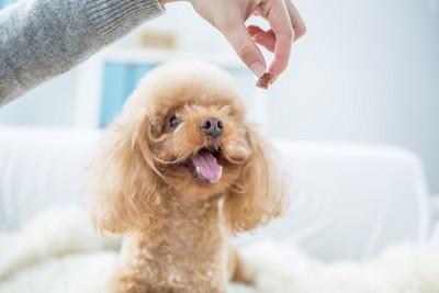 犬とおやつ