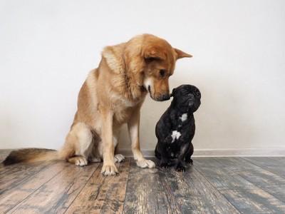 自分より小さい犬の匂いを嗅ぐ茶色い犬