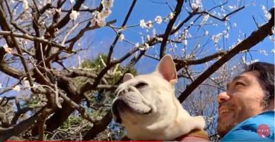 梅がきれいだよ