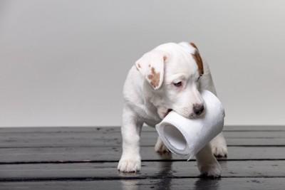トイレットペーパーをくわえる子犬