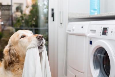 洗濯物を運ぶ犬