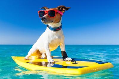 海でサングラスをしてサーフボードに乗る犬