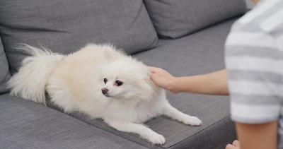 なでられて顔をそむける犬