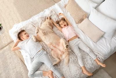 子ども2人とベッドで一緒に眠るゴールデンレトリバー