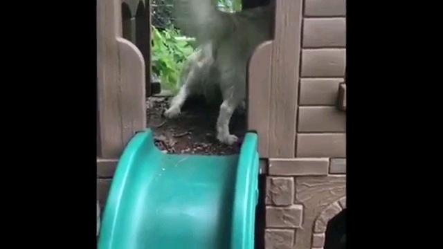 引き返す犬