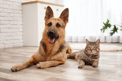 同じ姿勢でくつろぐシェパードと猫