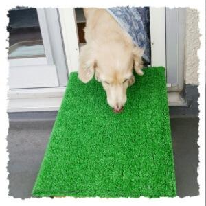 手づくりスロープを使用する犬