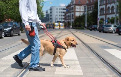 誘導する補助犬