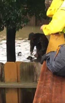 人の方へ泳いできた犬