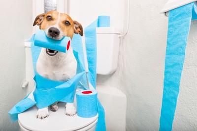 犬がトイレに座って水色のトイレットペーパーをくわえている