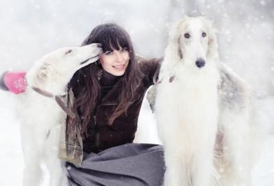 雪の中にいるボルゾイ