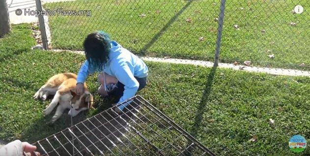 芝生の上で動かなくなった犬