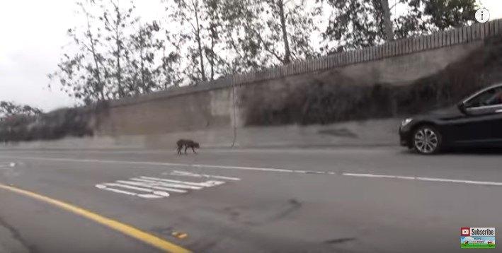 高速道路入口をうろつく犬