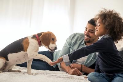 子供にお手をするビーグル犬と見守る父親