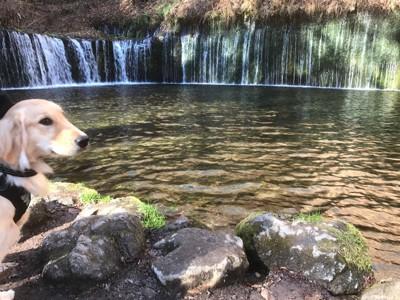 滝の流れるドッグランで遊ぶ犬