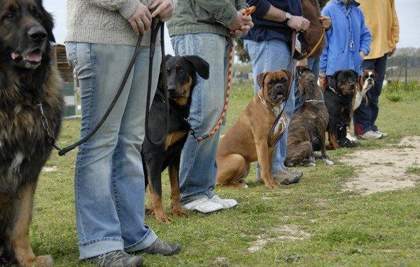 グループトレーニング中の犬たち