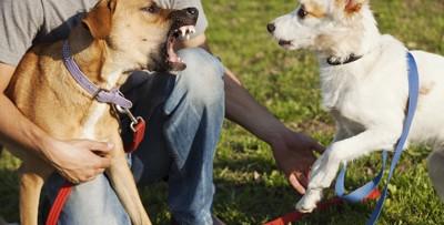 威嚇する犬を制止する人と驚く犬