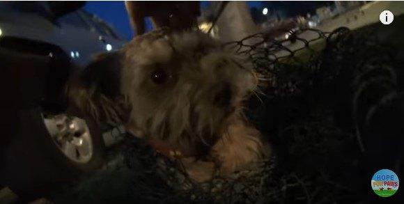 網から頭を出した犬